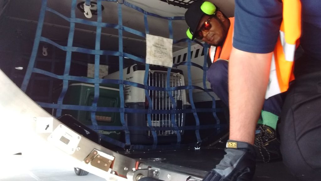 """A photo of """"Buddy"""", the first live animal to be exported by air, in his transportation cage in the hold of an Embraer E190 awaiting departure from St Helena"""