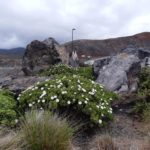 Photograph of endemic plants and rockery in the precinct gardens at St Helena Airport