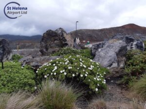 Photo of endemic plants in the flower beds in the airport precinct